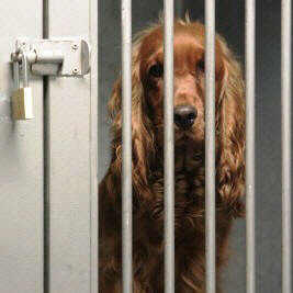 do your part to protect dogs from ending up in kennels
